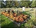 TQ4677 : Grave in Woolwich New Cemetery by Marathon