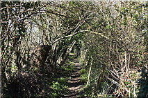 TQ5641 : Wooded footpath by N Chadwick