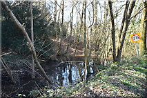 TQ5541 : Wooded pond by N Chadwick