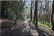TQ5541 : Footpath, Shadwell Wood by N Chadwick