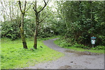 NX4355 : Footpath to the Martyr's Stake, Wigtown by Billy McCrorie