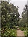 TF0820 : Dripping trees by Bob Harvey