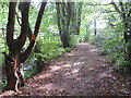 ST4455 : Public footpath near Cheddar by Malc McDonald
