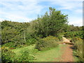 ST1538 : Path on the Quantock Hills, near Crowcombe by Malc McDonald