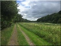 NT5682 : Path by Balgone Lake by Richard Webb