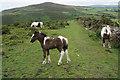 SS6047 : Ponies on Girt Down by Bill Boaden