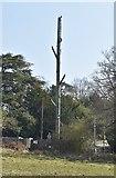 TQ5637 : Tree or mast, Ramslye Farm? by N Chadwick