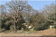 TQ5637 : Sandstone cliff near Ramslye Wood by N Chadwick