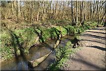 TQ5638 : River Grom, Friezland Wood by N Chadwick