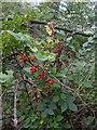 TF0820 : The jewels of Autumn by Bob Harvey