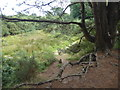 TQ4632 : Roo's Sandy Pit in the Ashdown Forest by Marathon