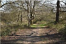 TQ5638 : Tunbridge Wells Circular Walk link path by N Chadwick
