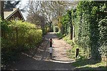 TQ5738 : Cabbage Stalk Lane by N Chadwick