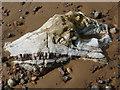 NH7459 : One of the three Dragon's Teeth, Rosemarkie by Julian Paren