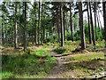 NZ0060 : Path through coniferous woodland by Trevor Littlewood