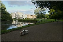SE6250 : Watching the ducks and geese by DS Pugh
