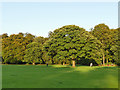 SE2432 : Outlier tree in Farnley Hall Park by Stephen Craven