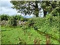 SD5285 : Beck near Dreamland Farm by Adrian Taylor