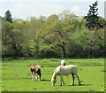 TQ0753 : Hatchlands Park - Pasture by Colin Smith