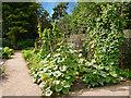 SJ7387 : Dunham Massey Vegetable Garden by David Dixon