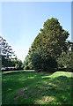 TF0733 : Amphitheatre and Horse Chestnut tree by Bob Harvey