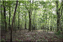 TQ5842 : Broke's Wood by N Chadwick