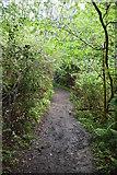 TQ5842 : Footpath, Broke's Wood by N Chadwick