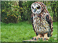SD4214 : Lego™ Sculpture Trail at Martin Mere - Sam the Short-eared Owl by David Dixon