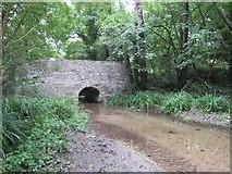 ST6601 : River Cerne at Cerne Abbas by Malc McDonald