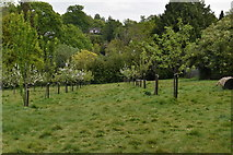 TQ5940 : Community Orchard by N Chadwick