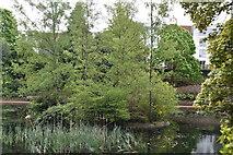 TQ5840 : Island in Pond, Grosvenor Park by N Chadwick
