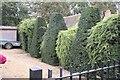 TF0811 : Ornamental hedges by Bob Harvey
