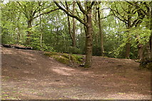 TQ5942 : Broke's Wood by N Chadwick
