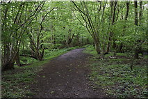 TQ5942 : Tunbridge Wells Circular Walk by N Chadwick