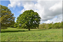TQ5843 : Tree in the Frith Valley by N Chadwick