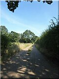 TM0734 : Constable, that's a Gainsborough: Fenbridge Lane approaching Flatford Road by Basher Eyre