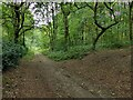SK5851 : Woodland along Rigg Lane by Alan Murray-Rust