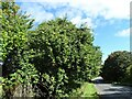 NZ0955 : Crab Apple tree by Robert Graham