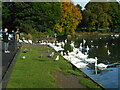 NS6367 : Feeding the swans by Richard Sutcliffe