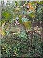 TF0821 : On-rushing autumn by Bob Harvey