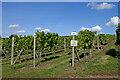 SO8292 : Wilkes's Vineyard near Halfpenny Green in Staffordshire by Roger  Kidd