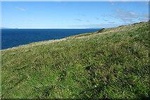 NX1087 : Grassy Clifftop by Anne Burgess