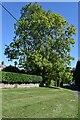 SU1214 : Roadside tree at Sandleheath by David Martin