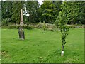 NY7204 : Memorial trees in St Oswald's churchyard, Ravenstonedale by Stephen Craven