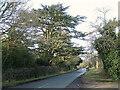 SP1773 : Cedar of Lebanon by Windmill Lane, Packwood  by Robin Stott