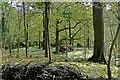 SD4676 : Log pile, Eaves Wood by Andy Waddington