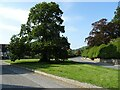 SO3672 : Tree on the village green, Brampton Bryan by Philip Halling