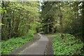 SE2854 : Link path, The Pinewoods by N Chadwick