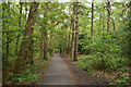 SE2854 : Footpath, The Pinewoods by N Chadwick