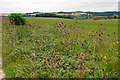 SP2214 : Border of teasels above the Windrush valley by Bill Boaden